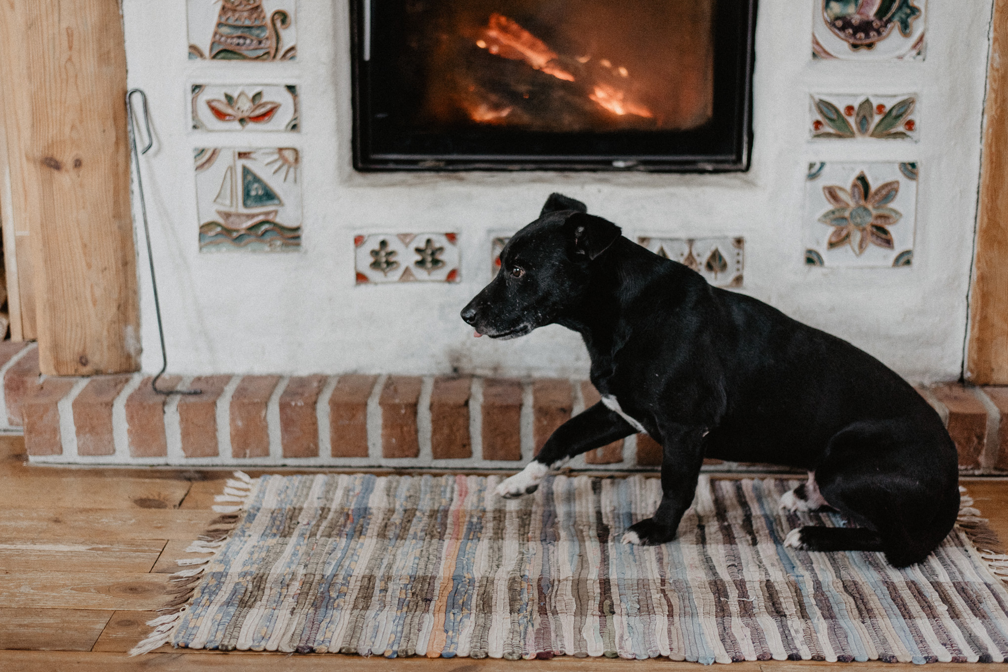 pies przy kominku