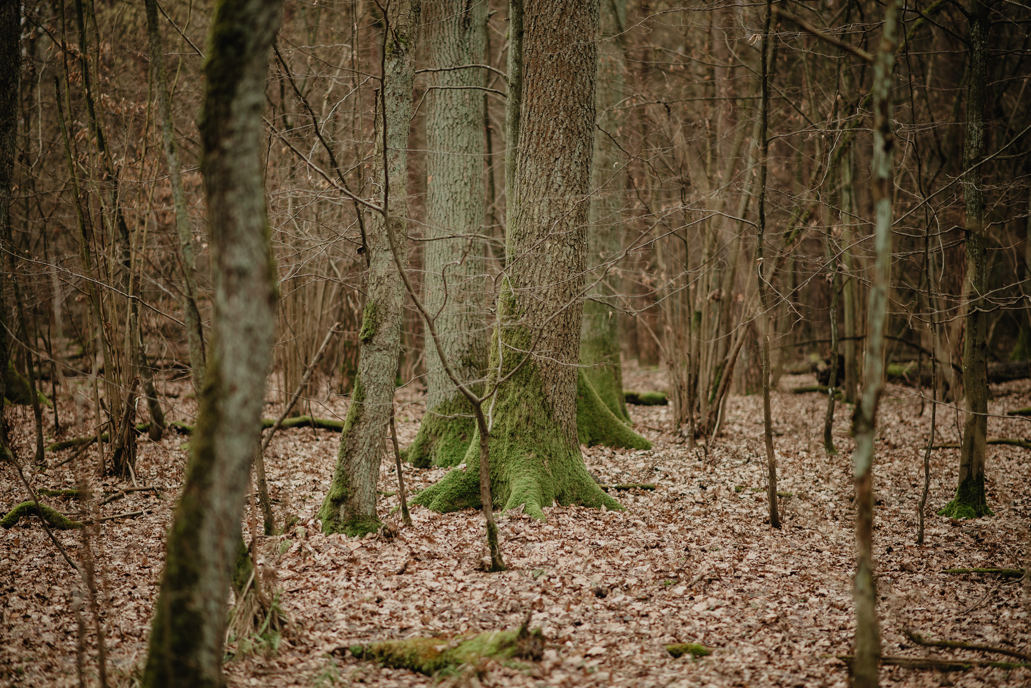 leśna ścieżka 4